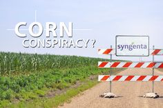 Arkansas Farmers Say Syngenta Tainted Grain Supply To Promote GMO