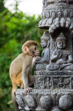 Photos of Swayambhunath Temple, Kathmandu - Attraction Images - TripAdvisor