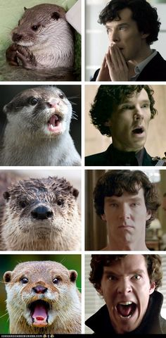 Otters Who Look Like Benedict Cumberbatch. Because let's face it, what otter doesn't want to be Sherlock Homes?