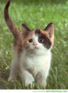 tiny kitten cat lolcat walking grass cute animals wild wildlife ...  - Catsincare.com
