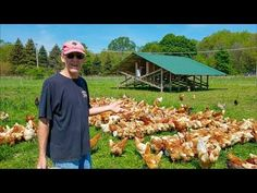 Chicken Coop inside a Greenhouse - Best Nest Box in Hawaii! - YouTube