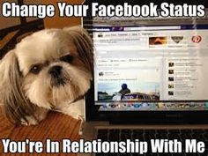 Funny Shih Tzu Pictures With Quotes - Yahoo Image Search Results