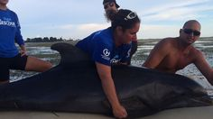 Dolphin rescued, released by Clearwater Marine Aquarium