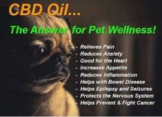 HempWellness for pets : CBD Infused Pet Products Available : NeTer Health and Beauty 🔄 Changing the Future Outcome Oral Health, Pet Health, Health And Wellness, Health Tips, Cdb Oil, Increase Appetite, Endocannabinoid System, Cbd Hemp Oil, Seizures