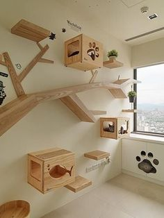 Cat Furniture - The Well Tempered Singer - cat Furniture Singer Tempered - Cat game .Cat Furniture - The Well Tempered Singer - cat Furniture Singer Tempered - Outdoor Cat Playground - Cat 17 Diy Cat water fountain Cage Chat, Cat Walkway, Cat Scratching Tree, Scratching Post, Cat Hotel, Diy Cat Tree, Cat Playground, Cat Shelves, Animal Room