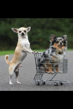 Lets go shopping