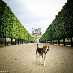 {photo of the day : lost dog, jardin des tuileries, paris}