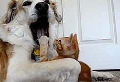 33 Gifs Of Cats Being Annoying
