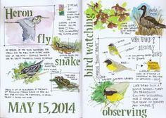 Jan Blencowe's Sketchbook Hypothesis: 3 Easy Ways to Begin Keeping a Nature Journal