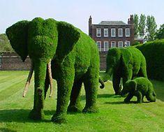 ...una famiglia di elefanti in giardino! #arstopiaria #potature #giardini