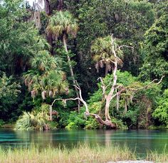 11 Florida State Parks You Have to Visit   Florida Travel Life