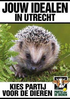 Partij voor de Dieren wil Egelvriendelijk Utrecht