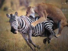 wildlife photographers - Yahoo! Image Search Results