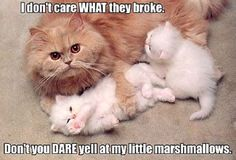 Protective Mother #Broke, #Little