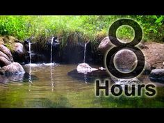 Relaxing Sounds of Nature 5: 60 minutes of Woodland Ambiance with Birds & Trickling Stream Sounds - YouTube