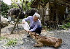 JAPANS SHAME!!!!!!! Four Years After Fukushima, Just One Man Lives In The Exclusion Zone – To Look After The Animals!  GOD BLESS THIS MAN!!!!!!!!!