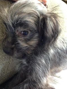 Closeup of baby Bentley