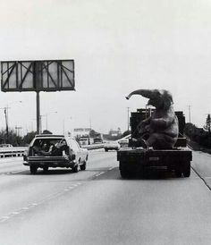 the water squirting animatic elephant travels to his new home at the jungle safari ride. 1962