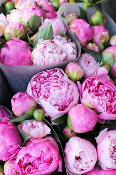 My mother would cut unopened peonies around May then refrigerate them until Memorial Day. They were ready to bloom and made any bouquet extra special. Fresh Flowers, Beautiful Flowers, Pink Flowers, Exotic Flowers, Pink Roses, Yellow Roses, Cut Flowers, Simply Beautiful, Beautiful Things
