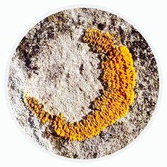 Circle - Organic Matter - 414 - Random Series - Diane Manton - 3rd October 2014 On October 3rd, October 2014, Organic Matter