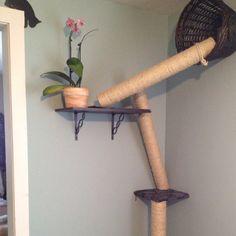 How to make cat jungle gyms and playgrounds jungle gym for Diy cat playground