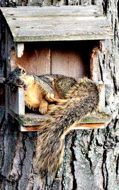 jemig, de notenbak is weer niet bijgevuld........