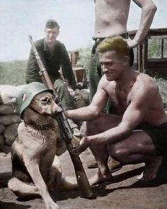tiktok anime Dad: we are not getting a dog Dad aft - graduation Military Dogs, Military Humor, Military Art, Military History, German Soldiers Ww2, German Army, Germany Ww2, War Dogs, War Photography