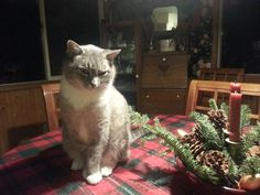 Merry Christmas 2013, Muffin. This was our last Christmas with this sweet friend. He left us in May 2014. He will always be missed. Always.