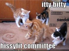 Itty bitty hissyfit committee