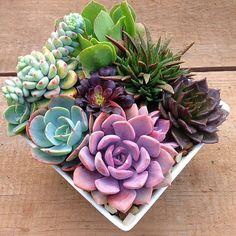 Succulent plater