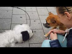 marionette dog and real dog ... - YouTube