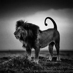 Au coeur de l'Afrique sauvage