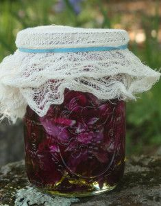 Rose Oil Infusing the Slow Way