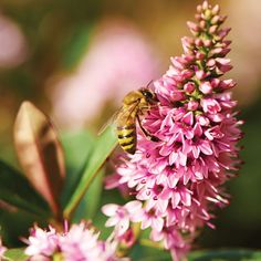 Gardening for Bees - Gardening - Mother Earth Living