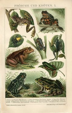 1894 Frogs Frog and Toad