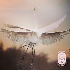 Owl Bird, All Gods Creatures, Exotic Birds, Bird Feathers, Dandelion, Animals, Image, Instagram, Herons