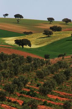 Alentejo cork trees and breathtaking landscape. Portugal - Explore the World with Travel Nerd Nici, one Country at a Time. Visit Portugal, Spain And Portugal, Portugal Travel, Algarve, Places To Travel, Places To See, Places Around The World, Around The Worlds, Fatima Portugal