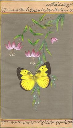 Indian Butterfly Miniature Art. What do you love most about nature? If it's butterflies , the pleasures of the garden and wild life…then you can look forward to celebrating them all on this beautiful art.