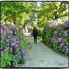 Britta Lynge @brittalynge Vitus Bering park...Instagram photo   Websta (Webstagram)