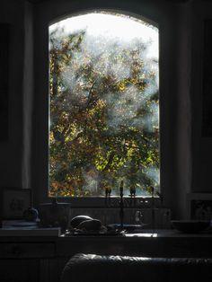 Window, autumn