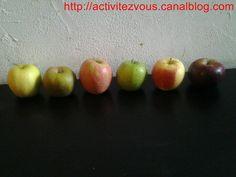 ACTIVITES: D�gustation de pommes