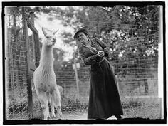 Harriet Chalmers Adams with Llama ca. 1912.