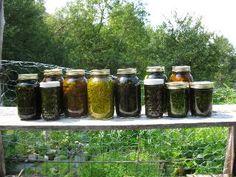 Moje pravdy - Léčivý a chutný smrk Natural Healing, Body Care, Mason Jars, Nature, Syrup, Alcohol, Naturaleza, Mason Jar, Bath And Body