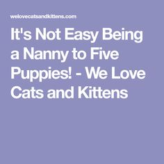 It's Not Easy Being a Nanny to Five Puppies! - We Love Cats and Kittens