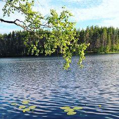 Rokua kylpee juhannuksen aatonaattona auringossa #juhannuskoivu #finnishnature #summer #lake #water #freshair #midnightsun #yötönyö #silence #rokua #rokuahealthspa #visitrokua #yleluonto #luontoonfi #ourfinland #visitfinland #cleanair #juhannus #juhannustaiat #lumme #finnismoments #outdoorfinlands Lake Water, Midnight Sun, Hotel Spa, Finland, National Parks, River, Health, Summer, Outdoor