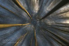 Arbroscopie by PascalBobillon
