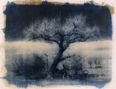 7.5 x 10 Gum bichromate over cyanotype. Printed on Canson Montval 124 lb Rough wc paper.