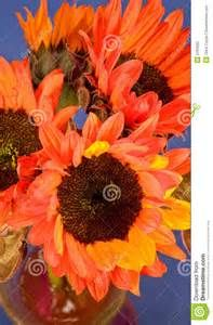 Red Sunflowers - Yahoo Image Search Results