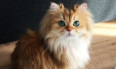 This May Be The Prettiest Cat In The World--scroll down to the last pic.  Love!