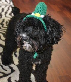 schnoodle dog leprechaun st patrick's day costume